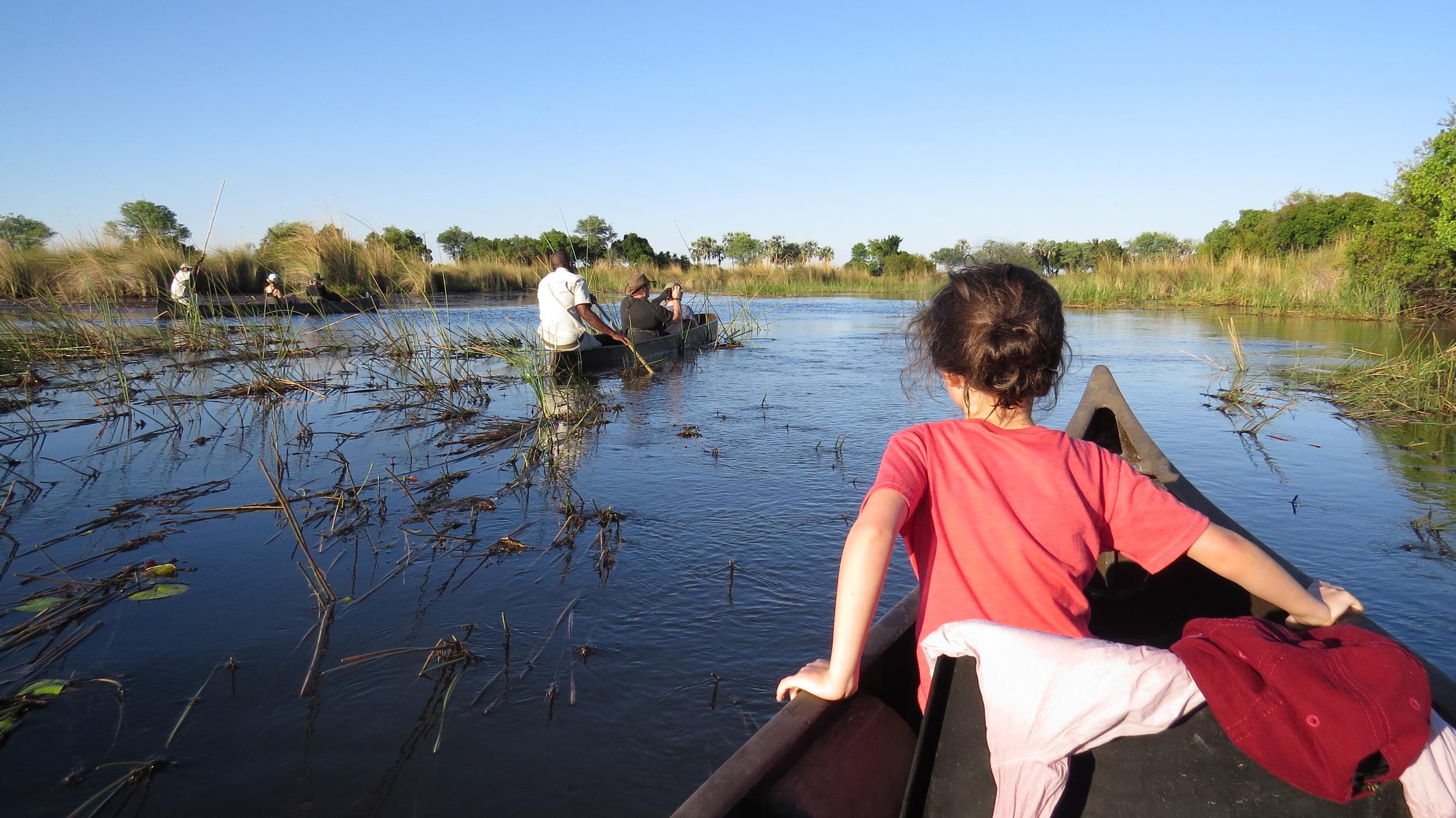 Wildlife spotting via canoe.