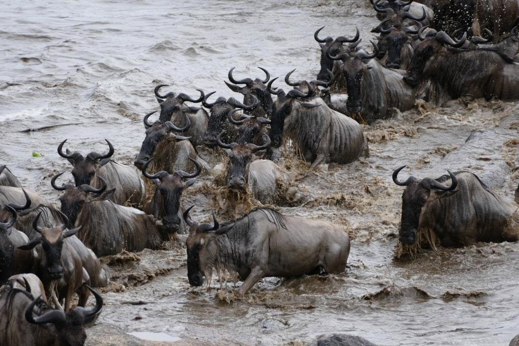 Intro. to Tanzania -  Arusha - Tarangire - Manyara - Ngorongoro - Serengeti1 night Arusha Coffee House, Arusha                         2 nights Little Oliver's Camp, Tarangire                       2 nights Gibb's Farm, Ngorongoro Crater / Karatu                2 nights Namiri Plains, Central Serengeti                      3 nights Kimondo Migration Camp, Serengeti