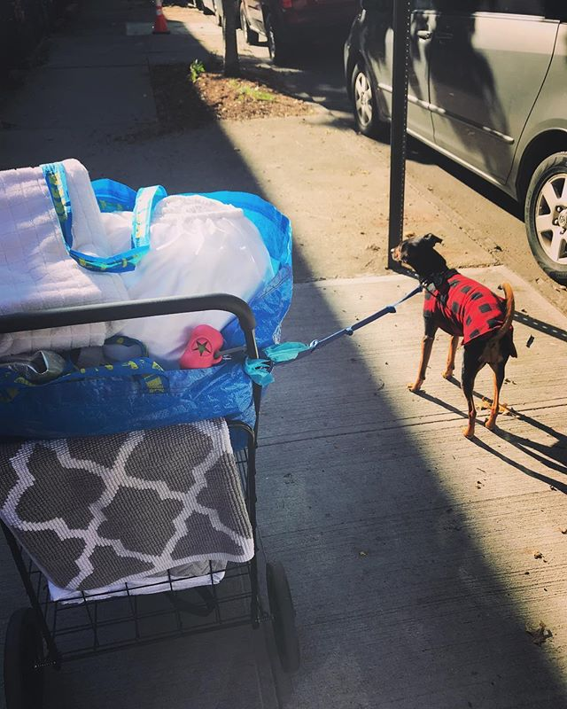 Back to life / back to reality. Also... hello, beautiful fall weather! 🍁🍂🍁🍂 . . . #mollywinterstewart #amplifiedlife #keepitpositive #broadway #performer #artist #brooklyn #nyc #laundryday #hownycdoeslaundry #ikeabag #grannycart #buffaloplaid #rescuedog