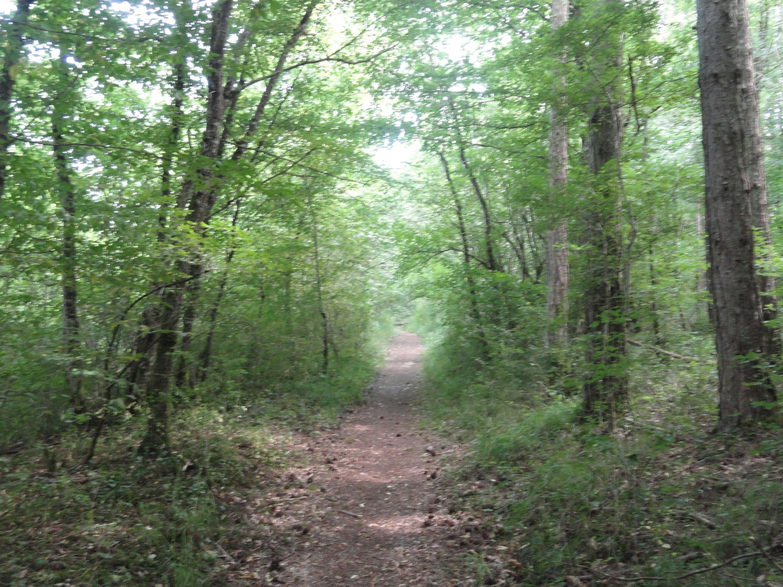 More Effing Forest
