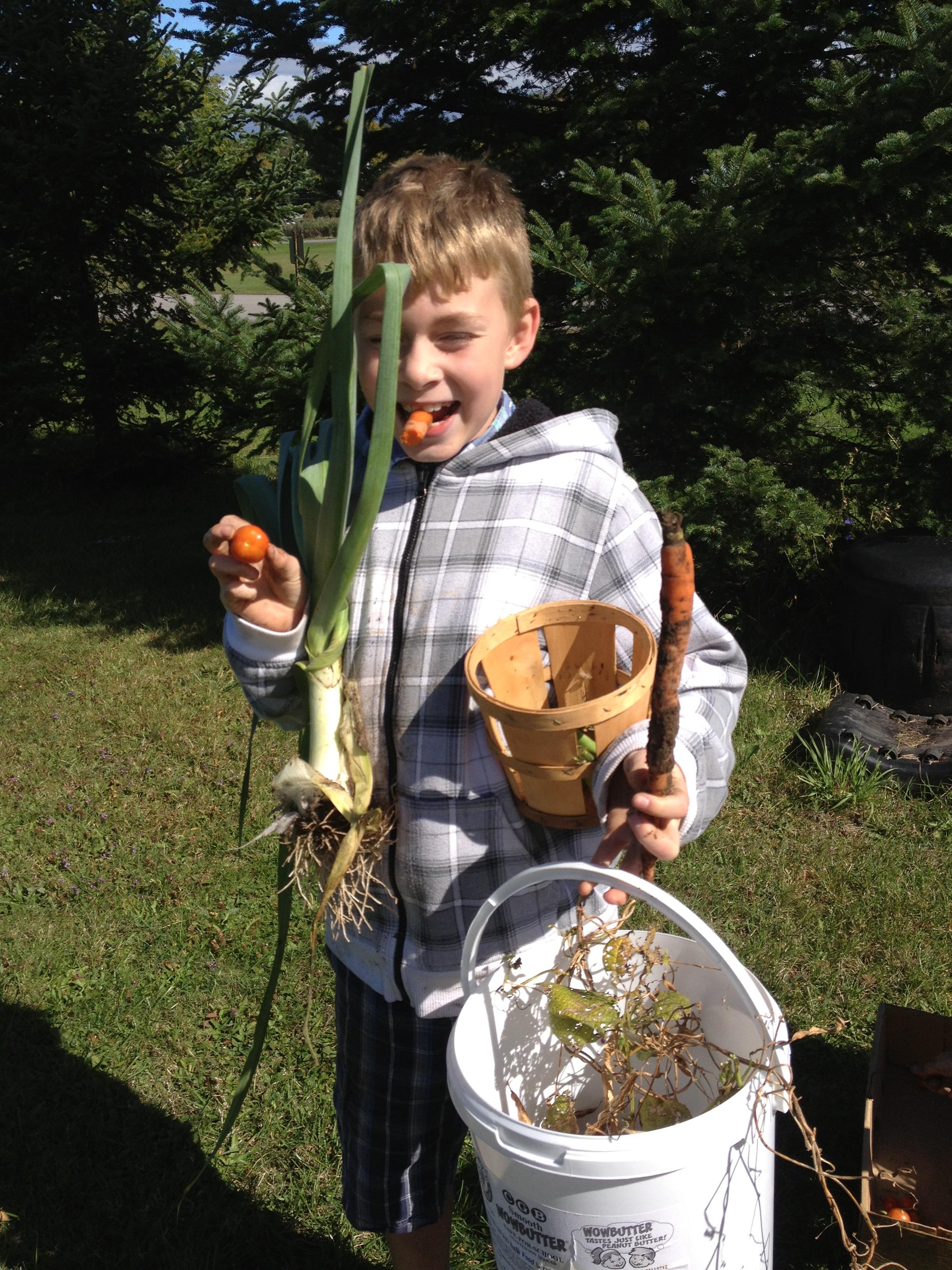 Daniel's Harvest.jpg
