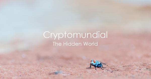 cryptomundial.jpg