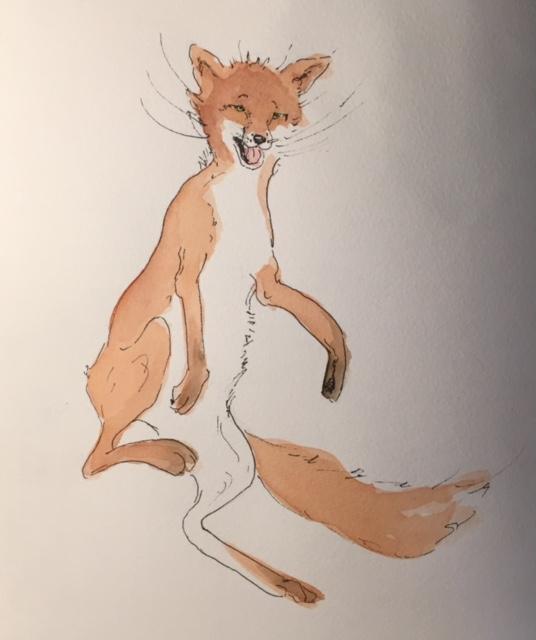 illustration Zwerger fox Dec 2015.jpg
