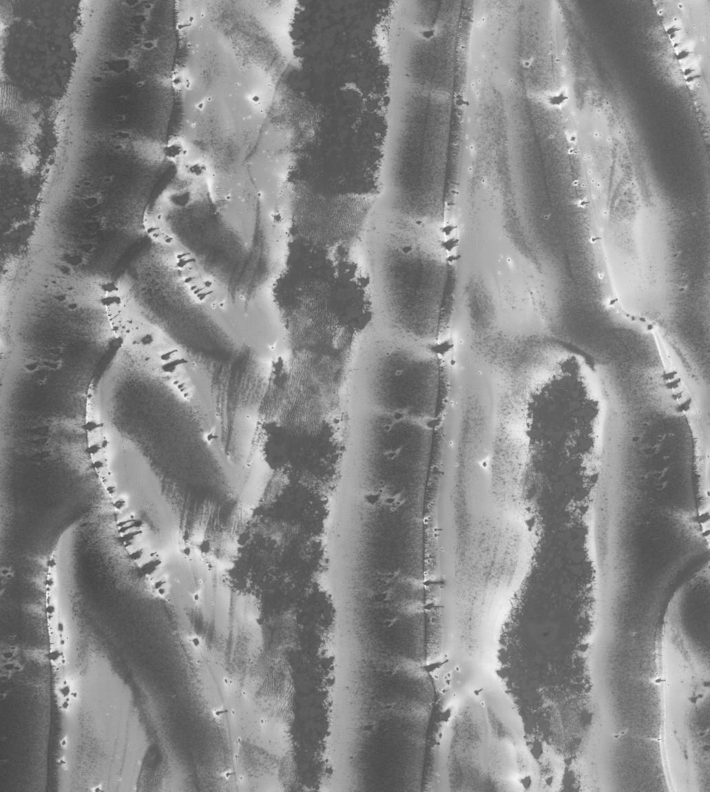 Larger and longer dune fields defrosting! Image credit: NASA/HiRISE/ASU