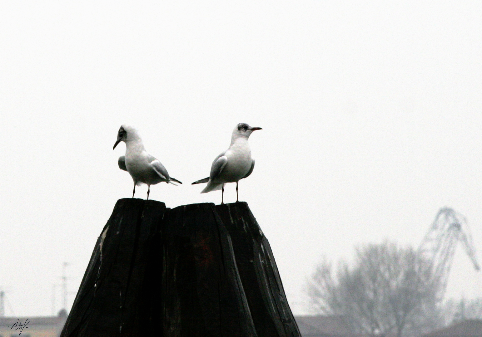 """""""Uten tittel"""", 2007"""