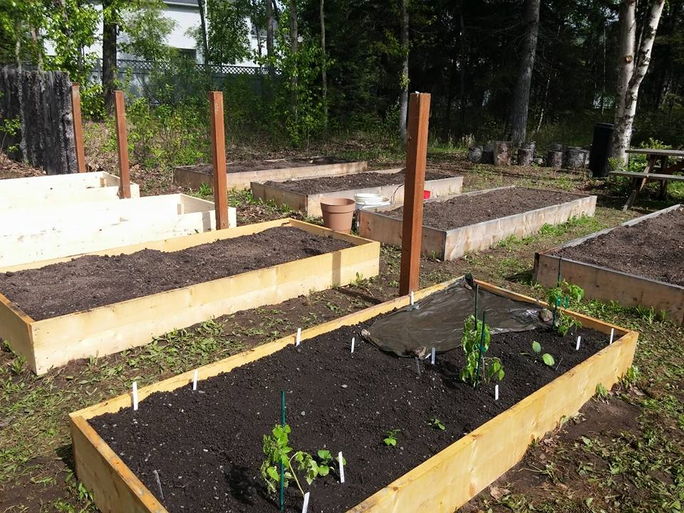 2nd summer, we added 4 more plots!