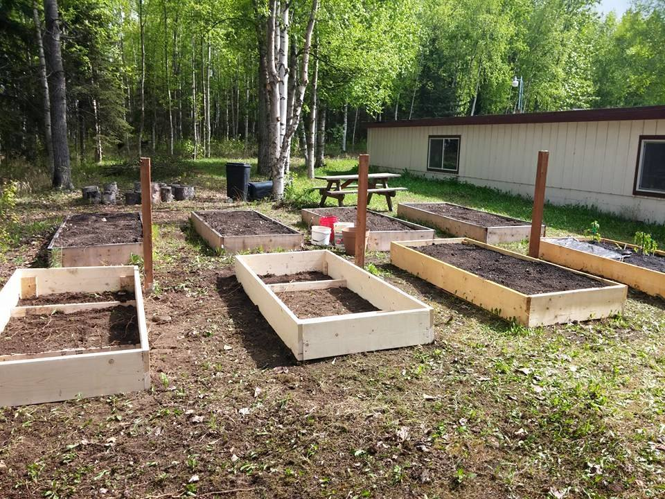 2nd summer- 8 plots total!