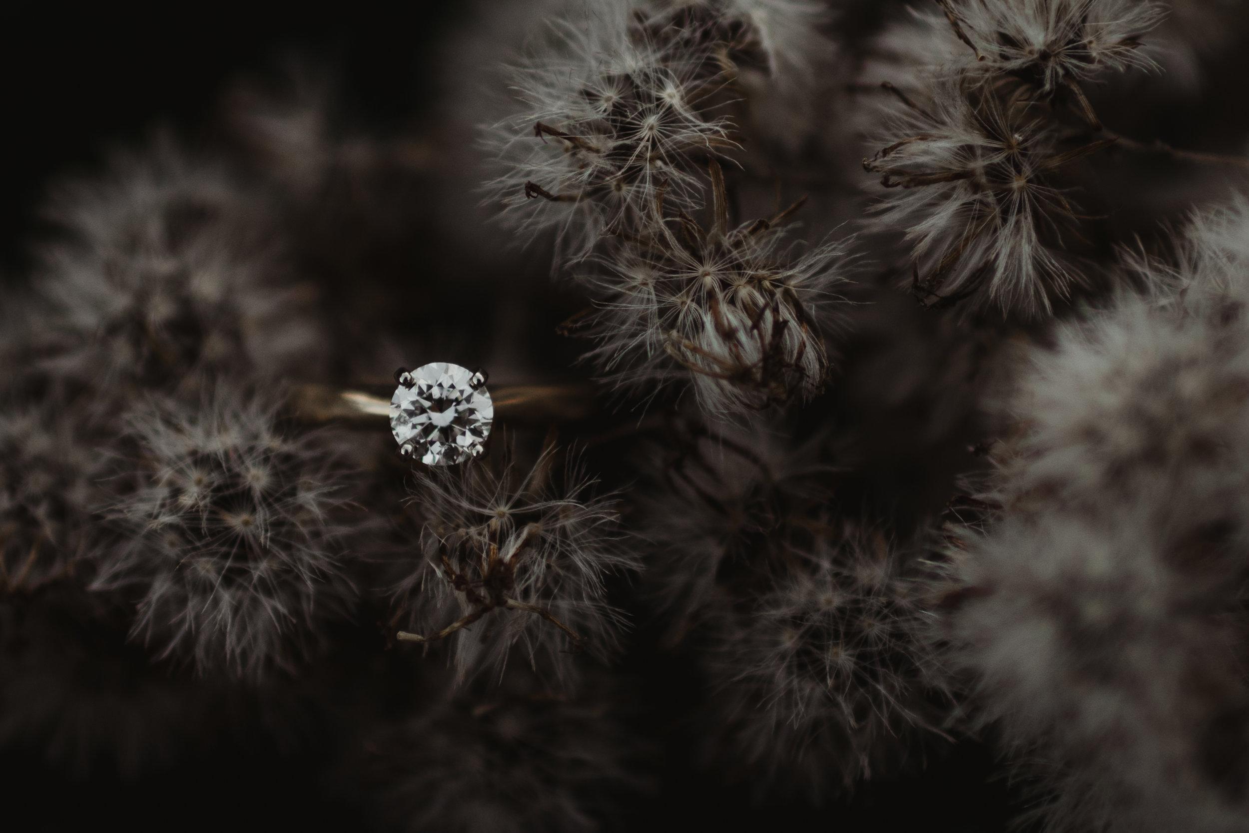 Reible Engagement-45.jpg