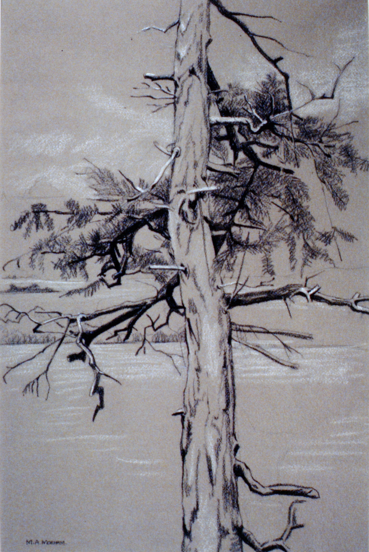"""Tree #6 , n.d., Marion Morham Grigsby, charcoal on paper,19"""" x 12.5"""", 1980.04.04. Anonymous gift."""
