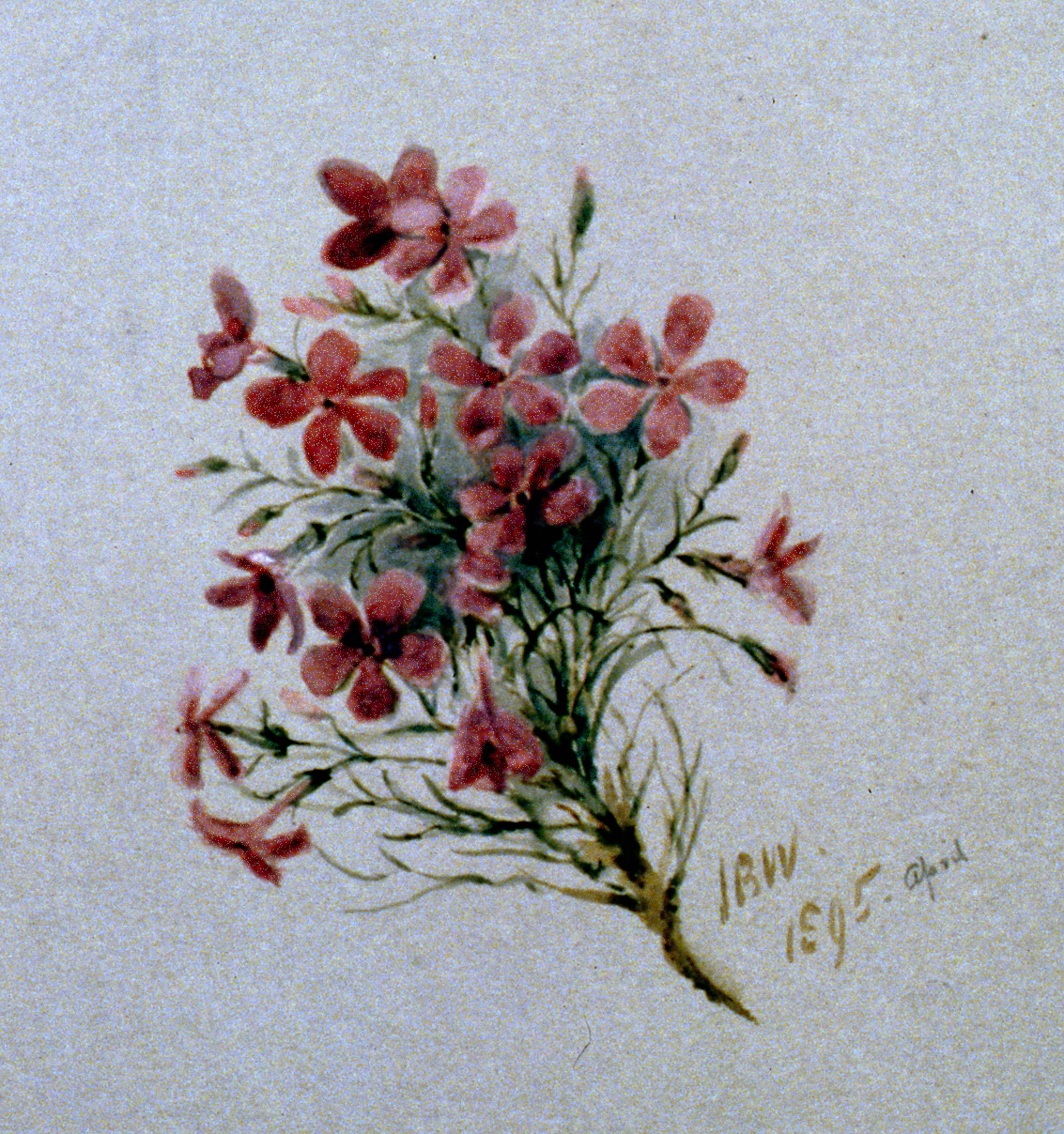 Pink Daisies, 1895, Julia Bullock-Webster, watercolour on paper, 25.5 x 35.5 cm, 1983.02.19.  Gift of Mrs. Barbara Steel.