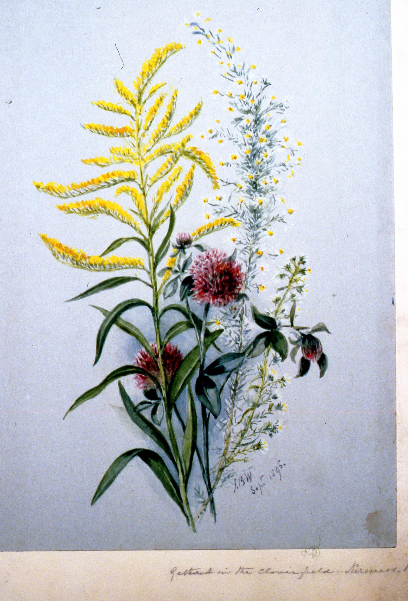 Gathered in Cloverfields , 1895, Julia Bullock Webster, watercolour on paper, 35.5 x 25.5, 1983.02.25. Gift of Mrs. Barbara Steel.