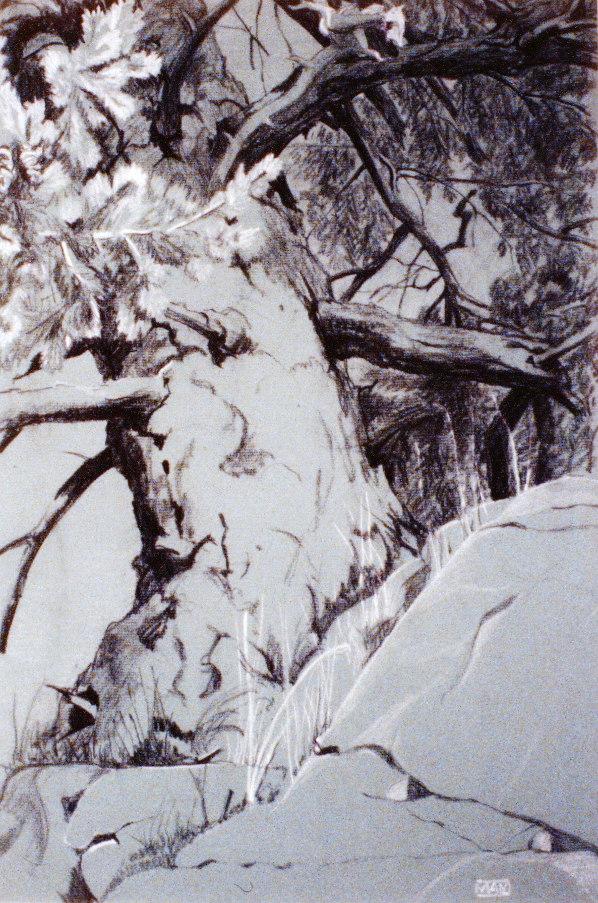 Tree #14 , n.d., Marion Morham Grigsby, charcoal and chalk on paper, 48.5 x 32 cm, 1980.04.05. Anonymous gift.