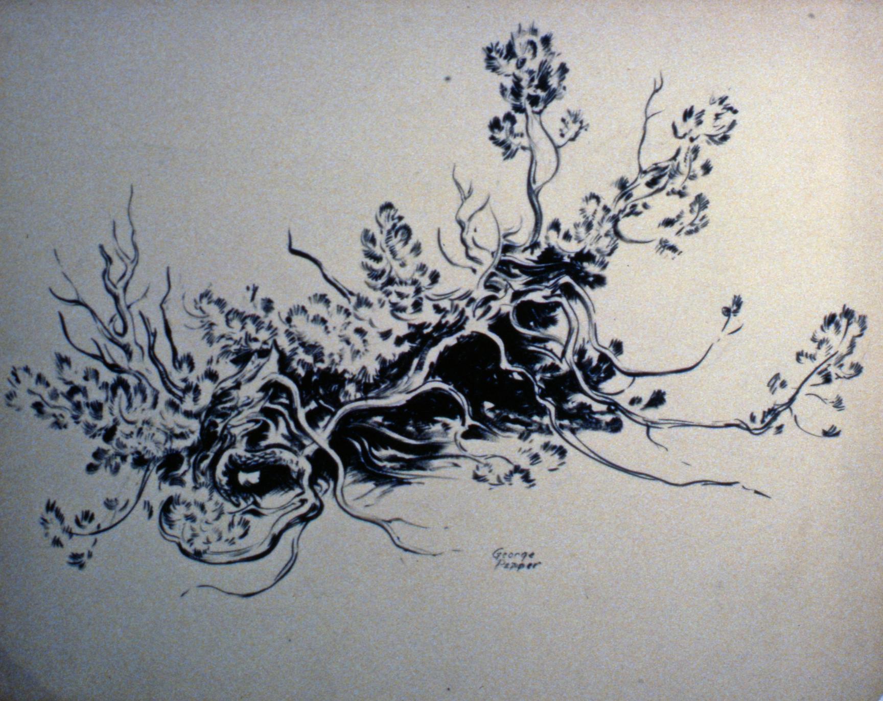 Untitled (Tree Root)