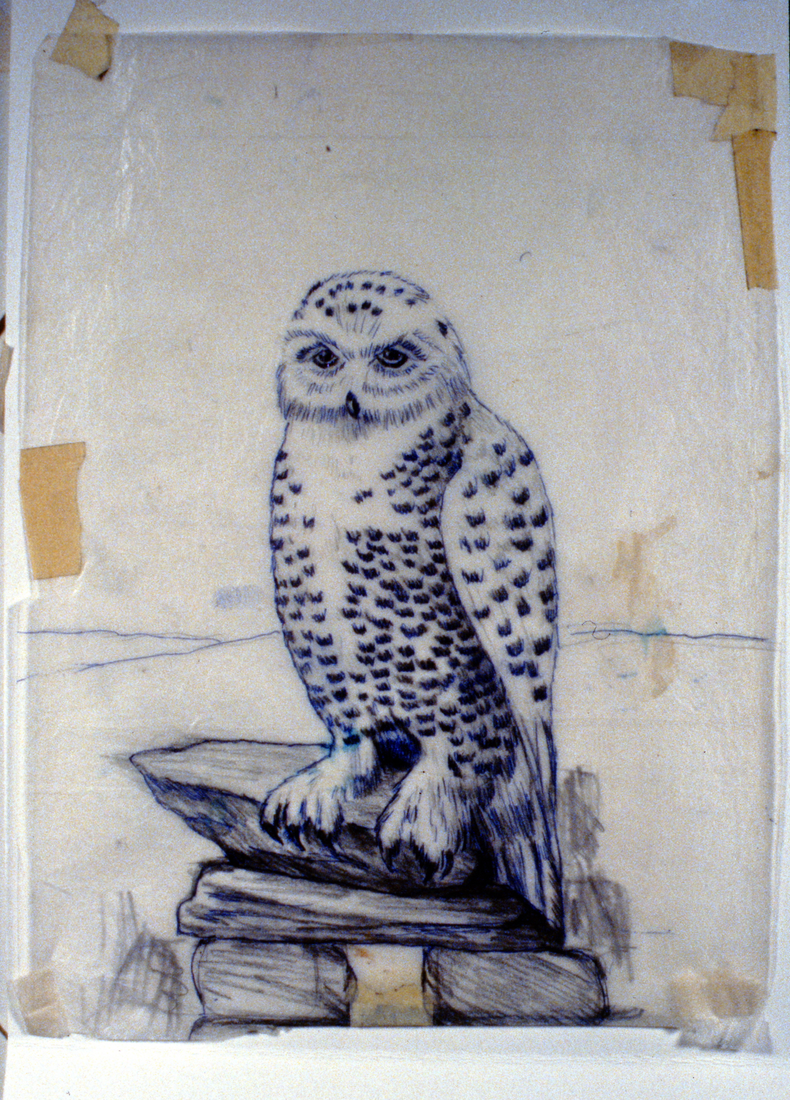 Snowy Owl , 1992, Minn Sjølseth, sketch, 27.5 x 21cm, 1996.02.04