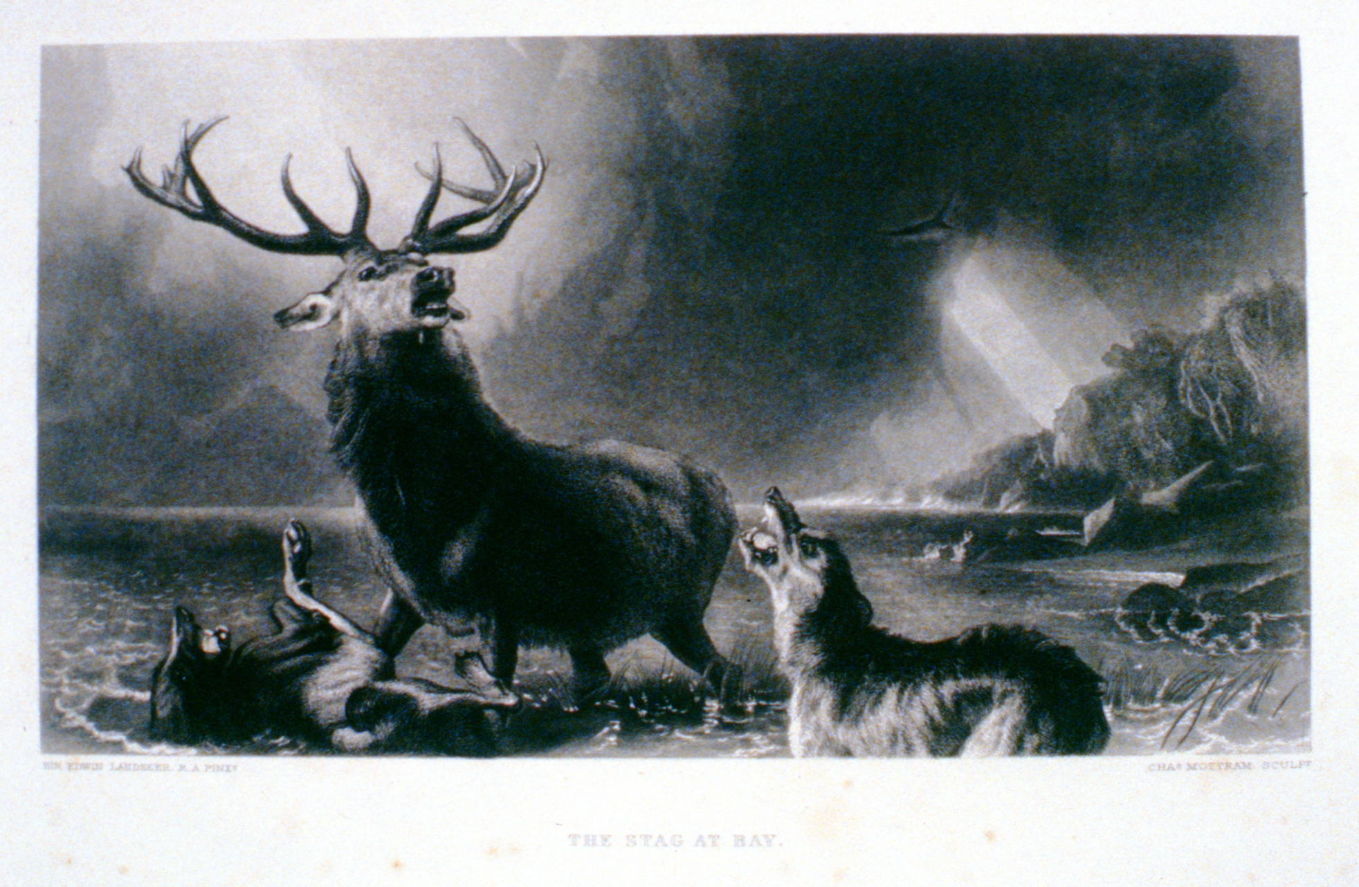 The Stag at Bay , c. late 19th Century, Charles Mottram, steel engraving, 28 cm x 15.7 cm, 1996.08.01, gift of Yvonne Adams