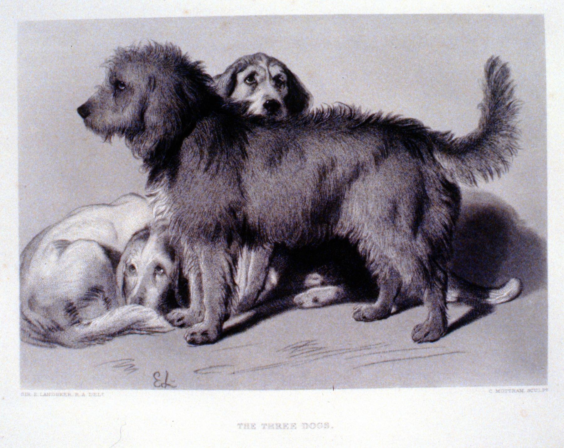 The Three Dogs , c. late 19th Century, Charles Mottram, steel engraving, 17.7 cm x 25.3 cm, 1996.08.05, gift of Yvonne Adams