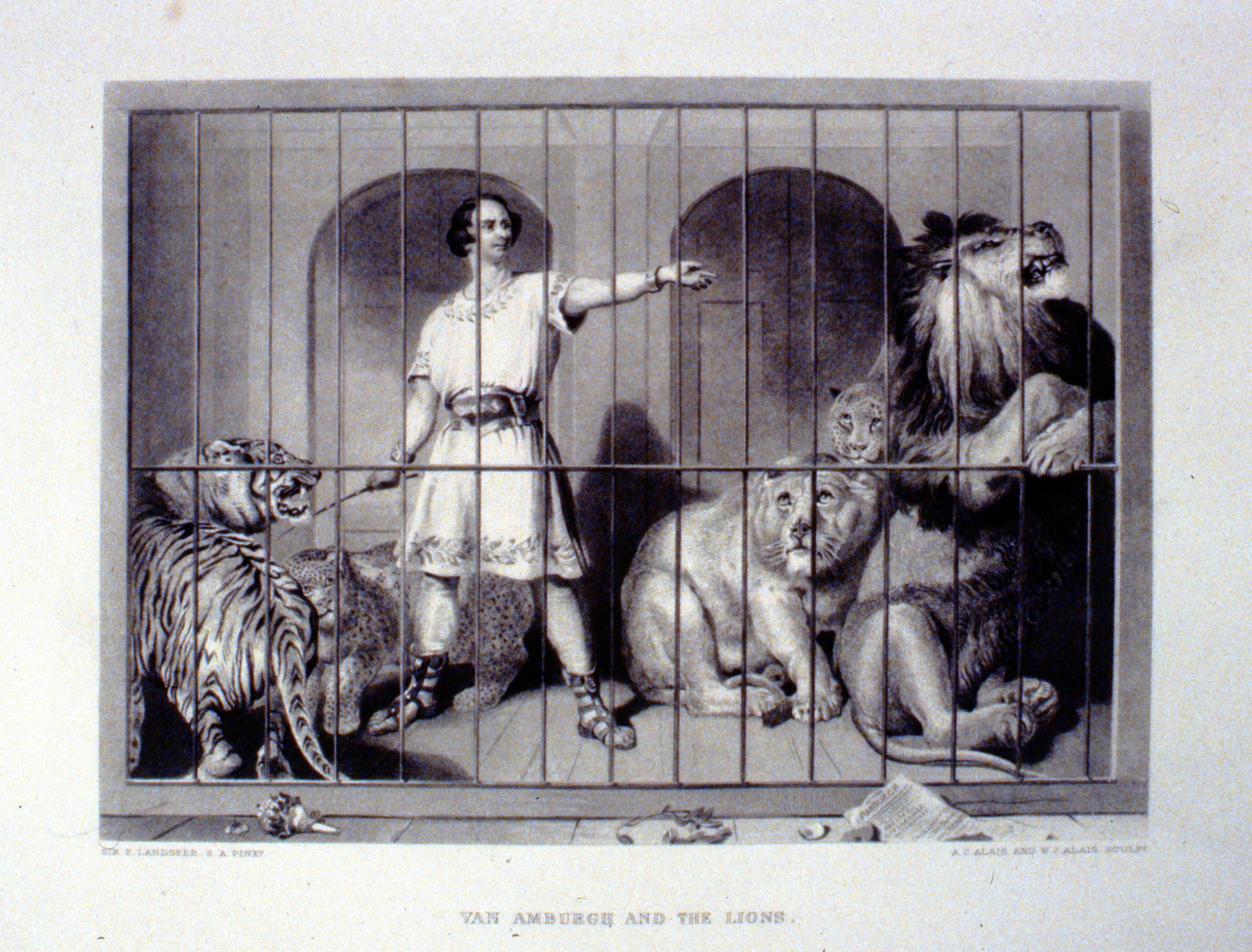 Van Amburgh and the Lions , c. late 19th Century, A.C. Alais & W.J. Alais, steel engraving, 18 cm x 25 cm, 1996.08.33, gift of Yvonne Adams