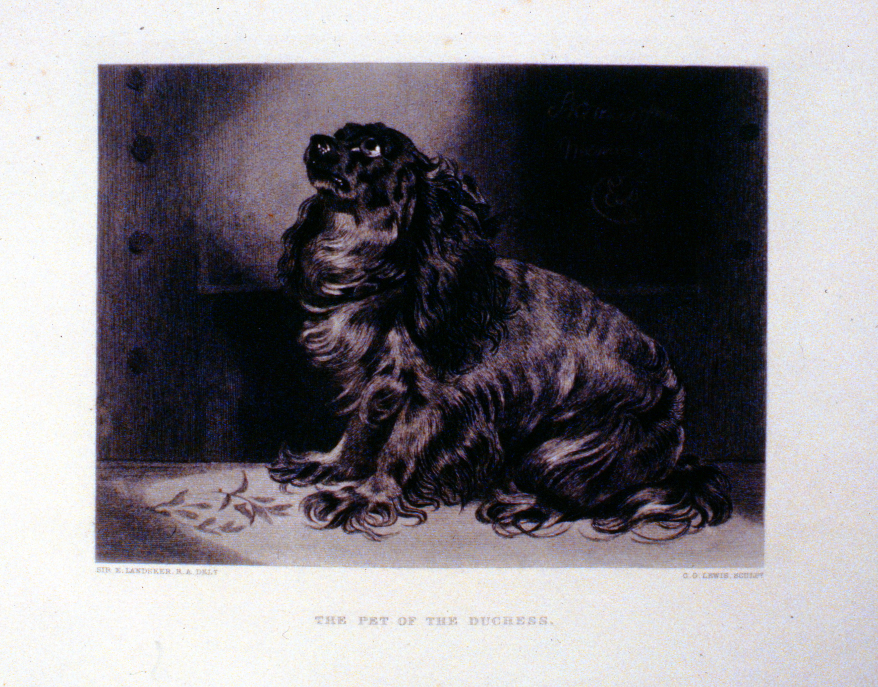 The Pet of the Duchess , c. late 19th Century, Charles G. Lewis, steel engraving, 15.2 cm x 20.4 cm, 1996.08.34, gift of Yvonne Adams