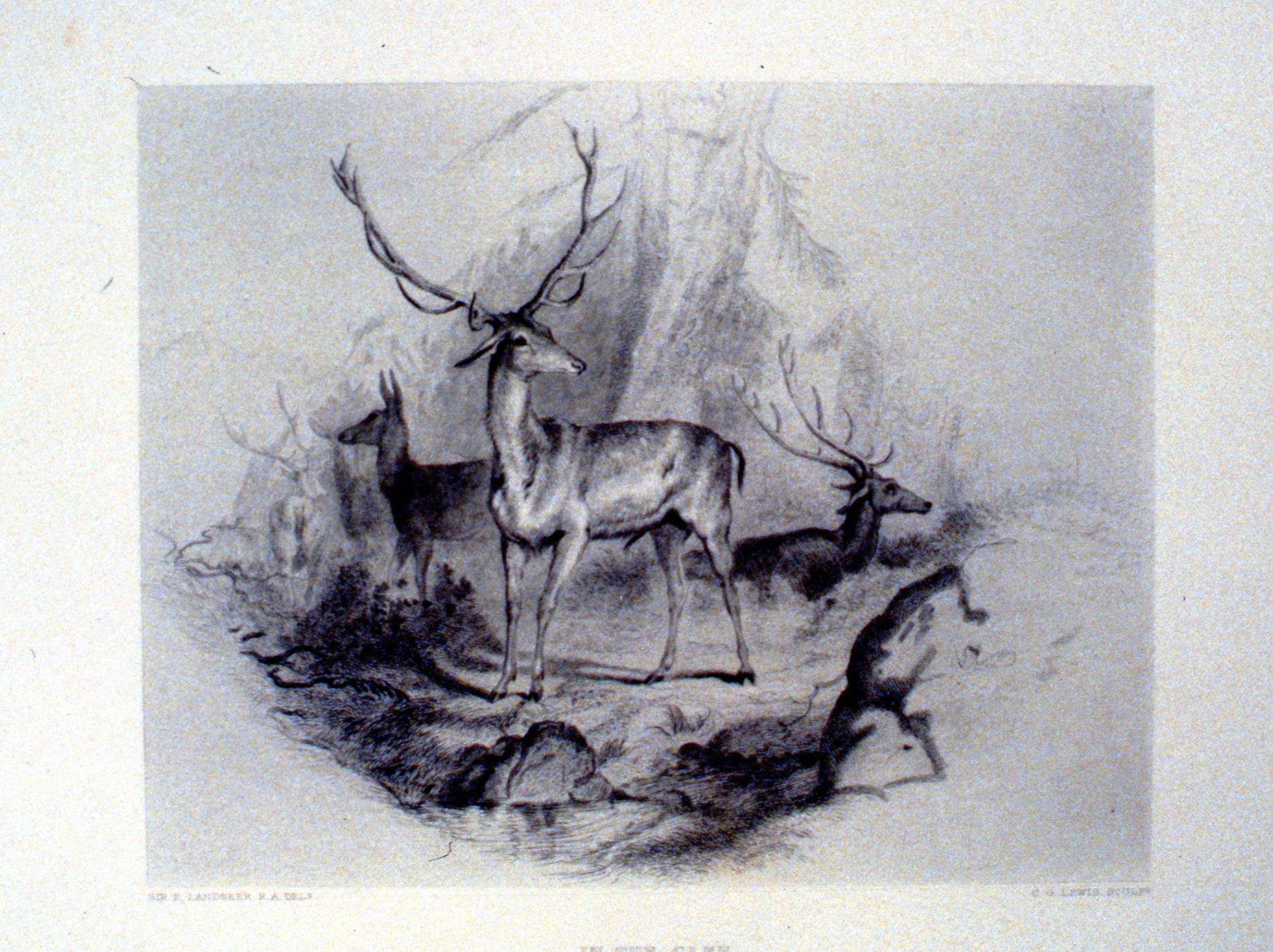 In the Glen , c. late 19th Century, Charles G. Lewis, steel engraving, 17.3 cm x 22 cm, 1996.08.35, gift of Yvonne Adams