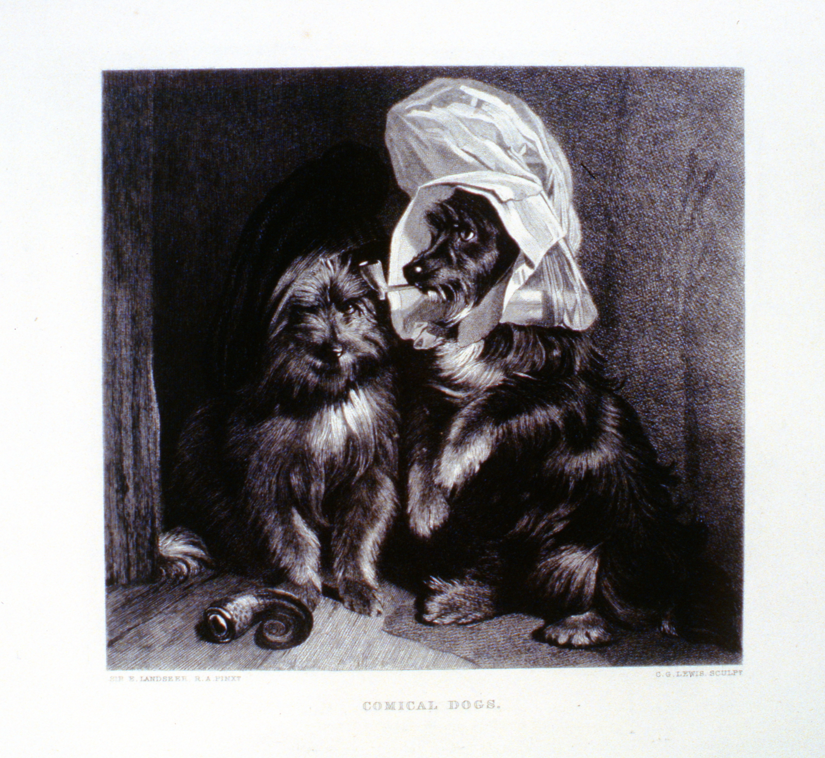 Comical Dogs , c. late 19th Century, Charles G. Lewis, steel engraving, 19.9 cm x 18.6 cm,1996.08.37, gift of Yvonne Adams