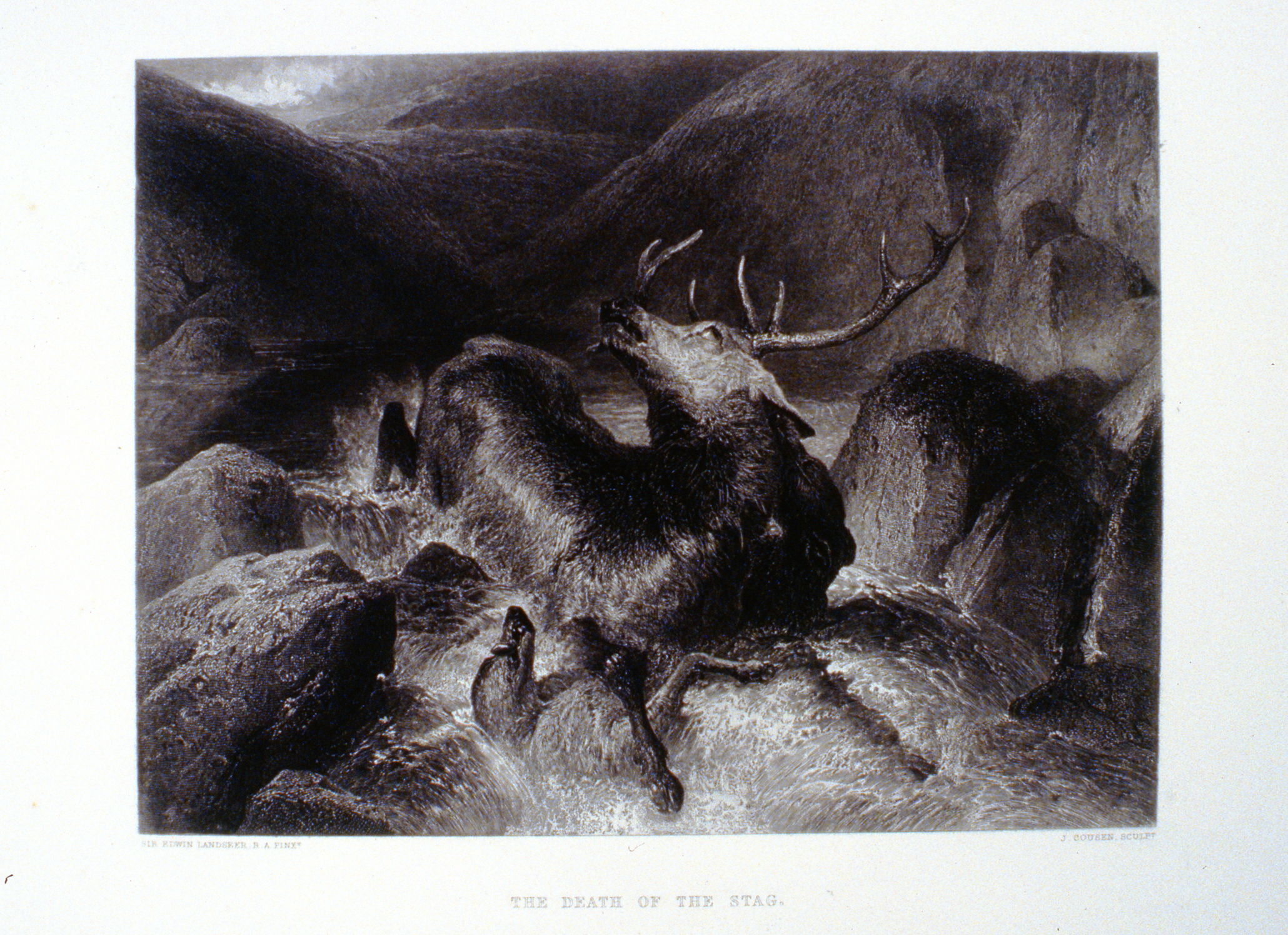 The Death of the Stag , c. late 19th Century, J. Cousen, steel engraving, 18.6 cm x 24.6 cm, 1996.08.41, gift of Yvonne Adams