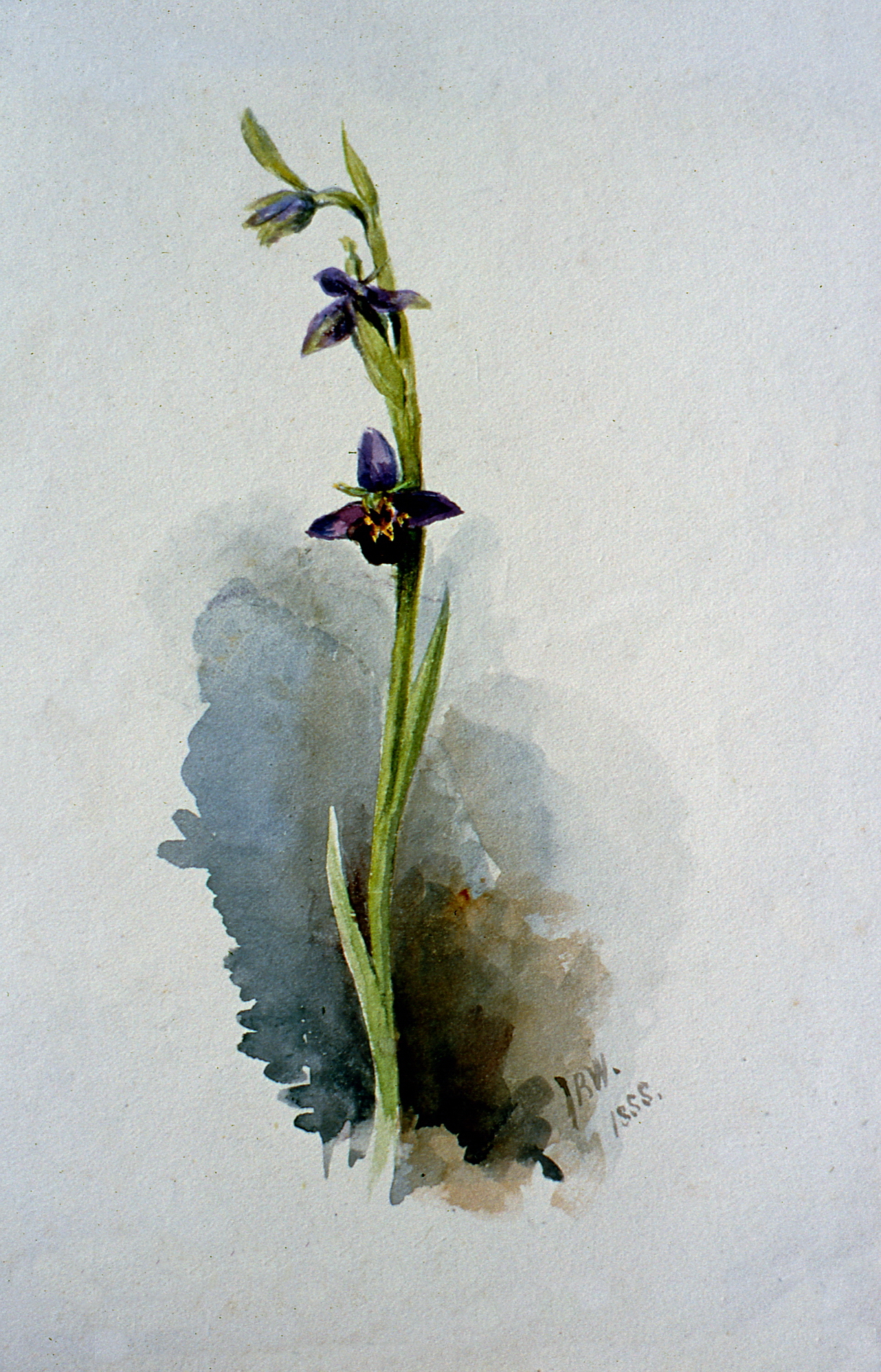 Untitled , 1888, Julia Bullock Webster, watercolour on paper, 22 cm x 13.7 cm, 2003.02.05, gift of The Grist Mill at Keremeos