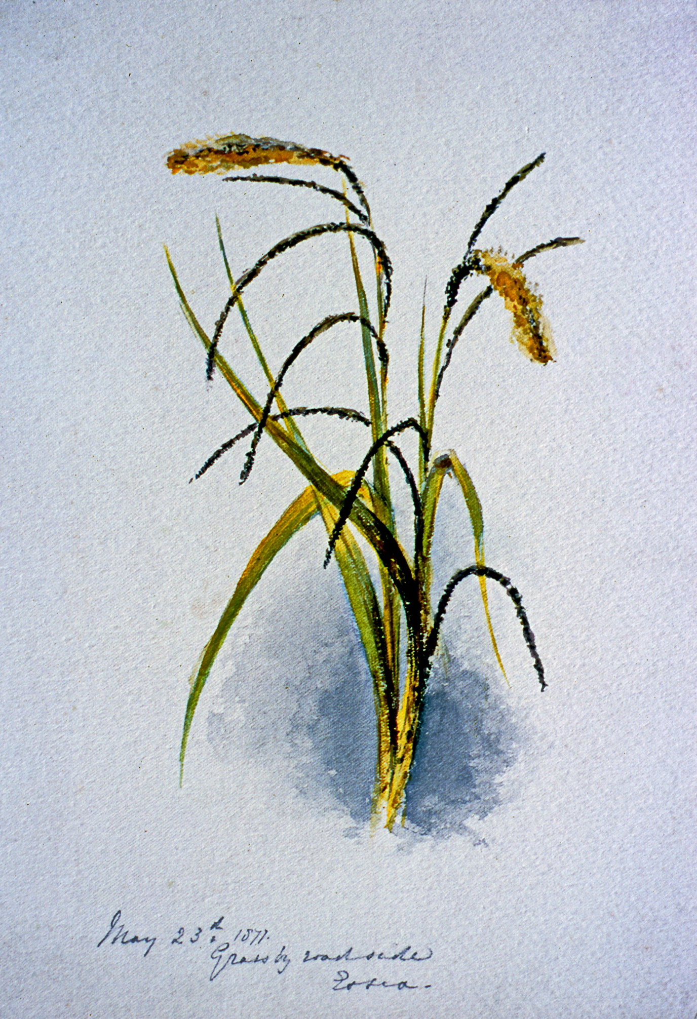 Grassy, (illegible) Side, (illegible), May 23 1871 . 1871, Julia Bullock Webster, watercolour on paper, 25.5 cm x 18 cm, 2003.02.11, gift of The Grist Mill at Keremeos