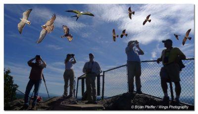 birdPfeiffer.jpg