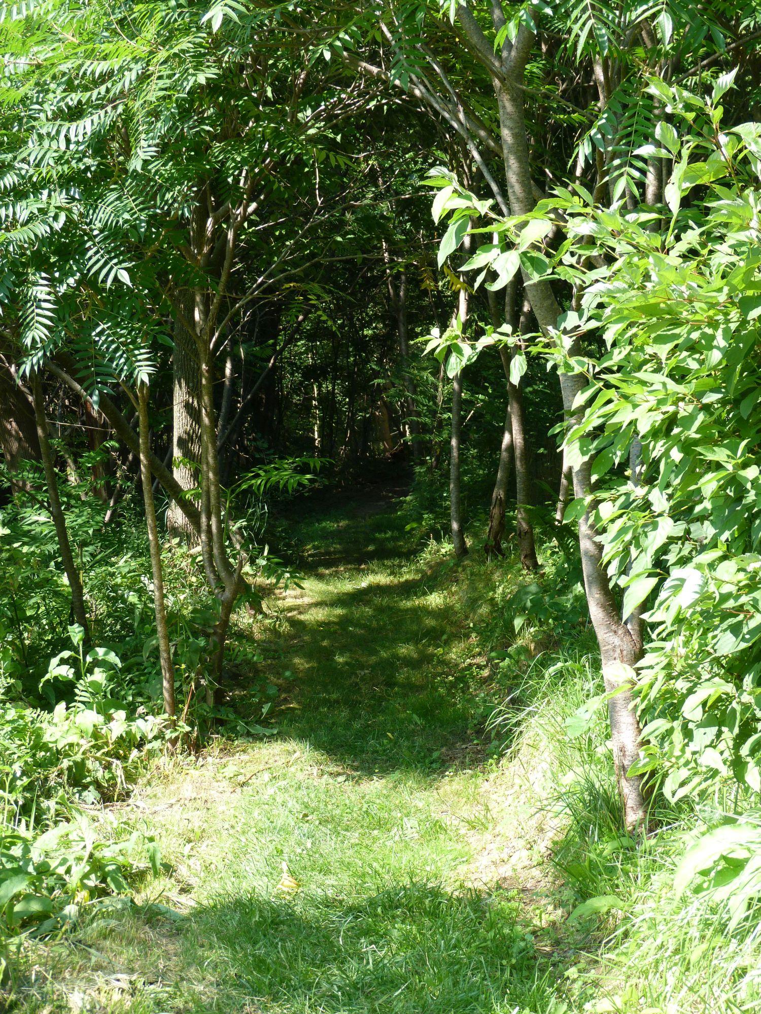 trail to Philo.jpg