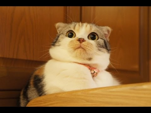 Even this cat is shocked he can be represented by the summation of circular curves and still look this good