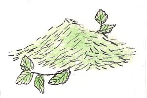 ISLAND MINT GREEN TEA