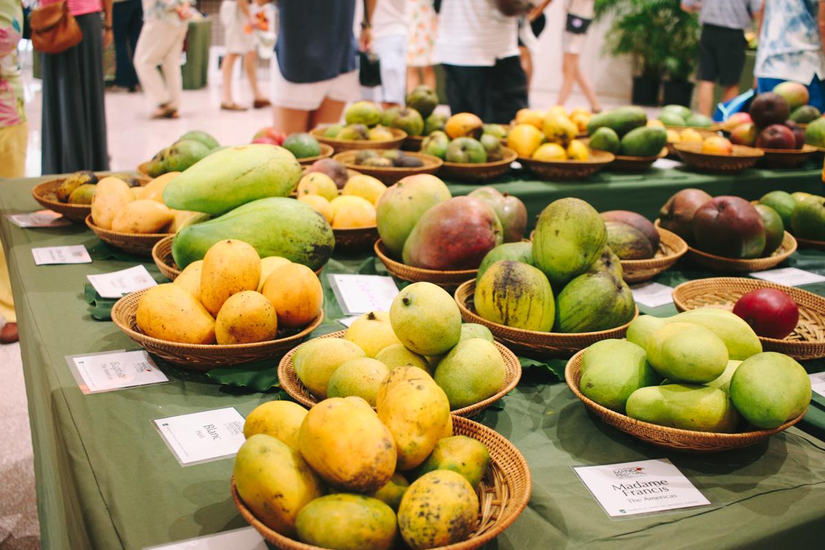 mango-festival-fairchild-garden-32.jpg