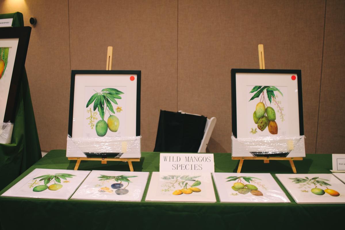 mango-festival-fairchild-garden-39.jpg