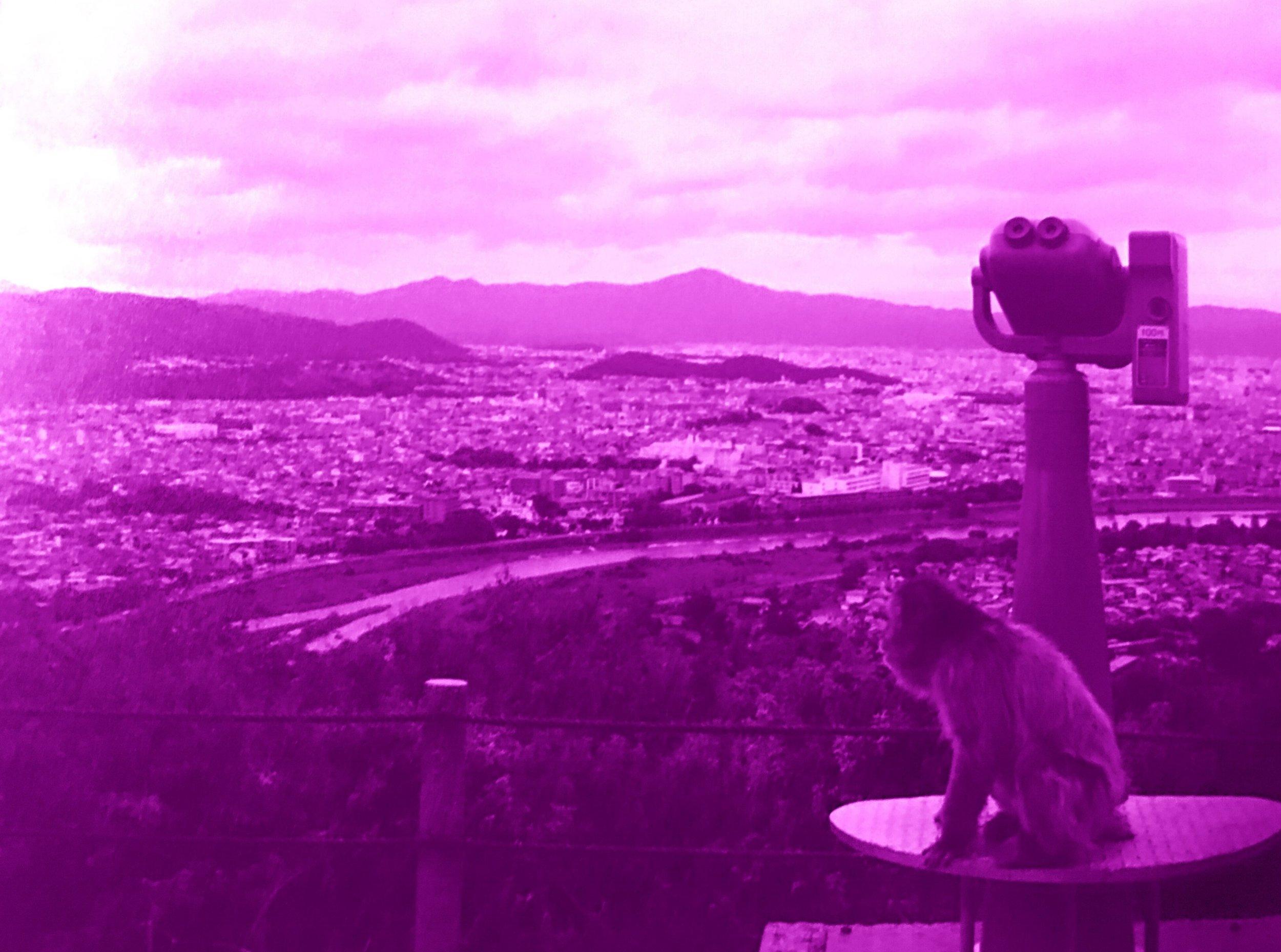 Purple Monkey.JPG