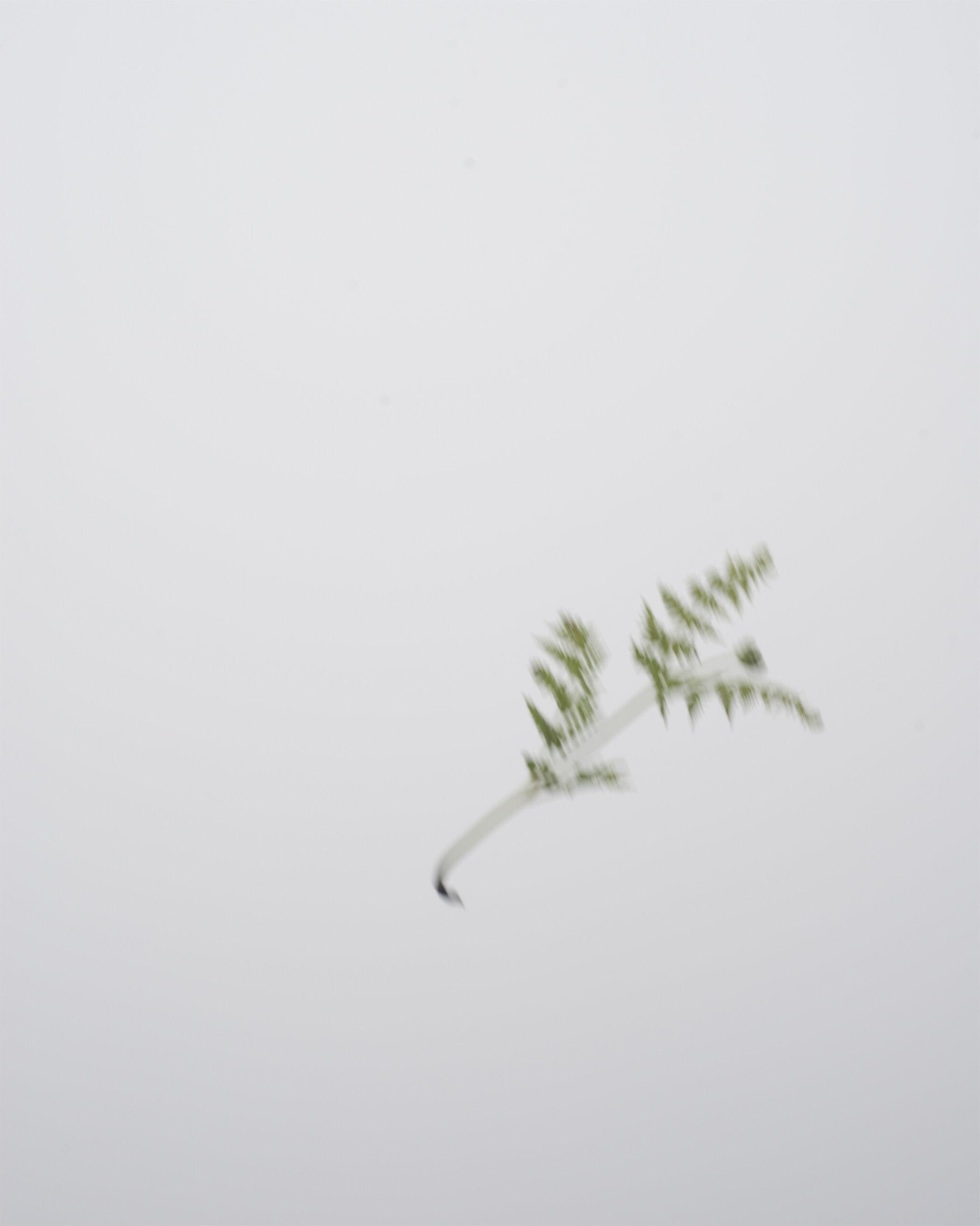 mist leaf.jpg