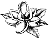 the_sugar_magnolia_flower-only-sm.png