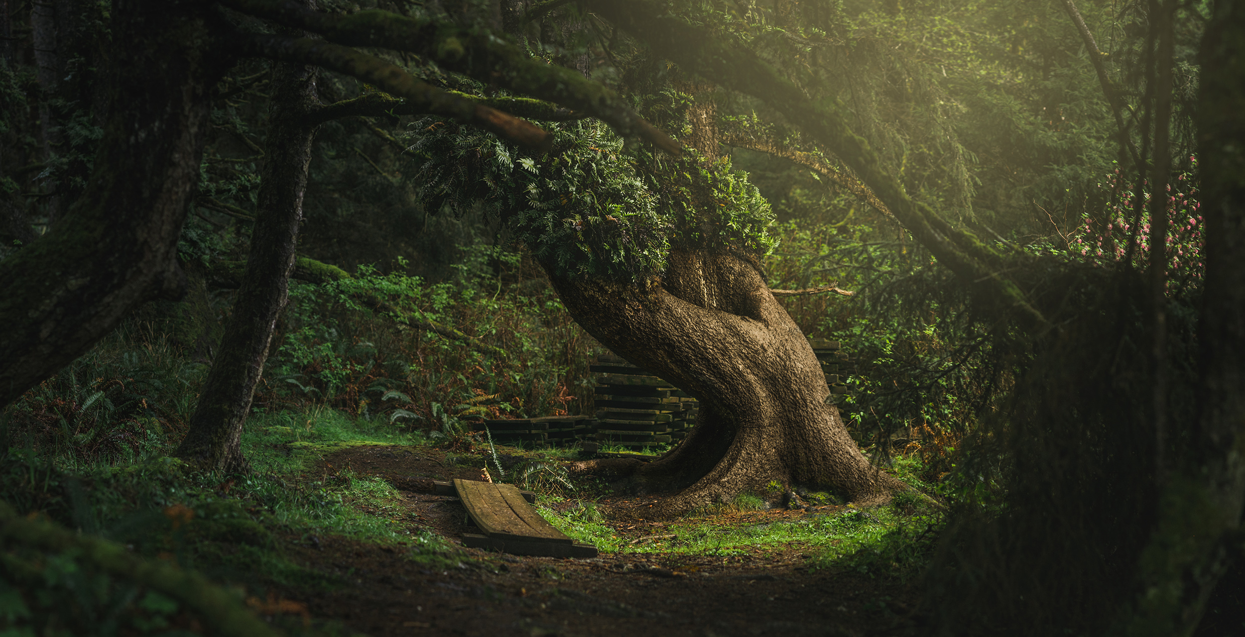 Magical Tree - Orick, CA