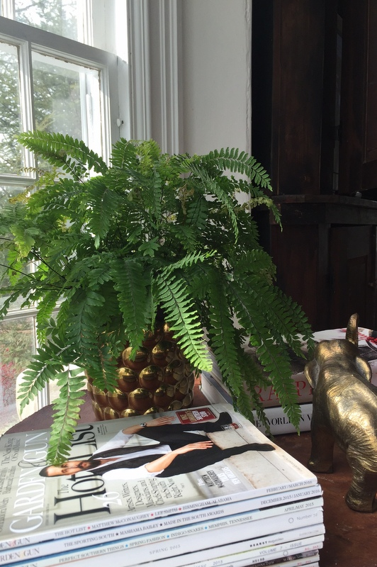 Bronze fern ( a variety of maidenhair fern, my favorite!)