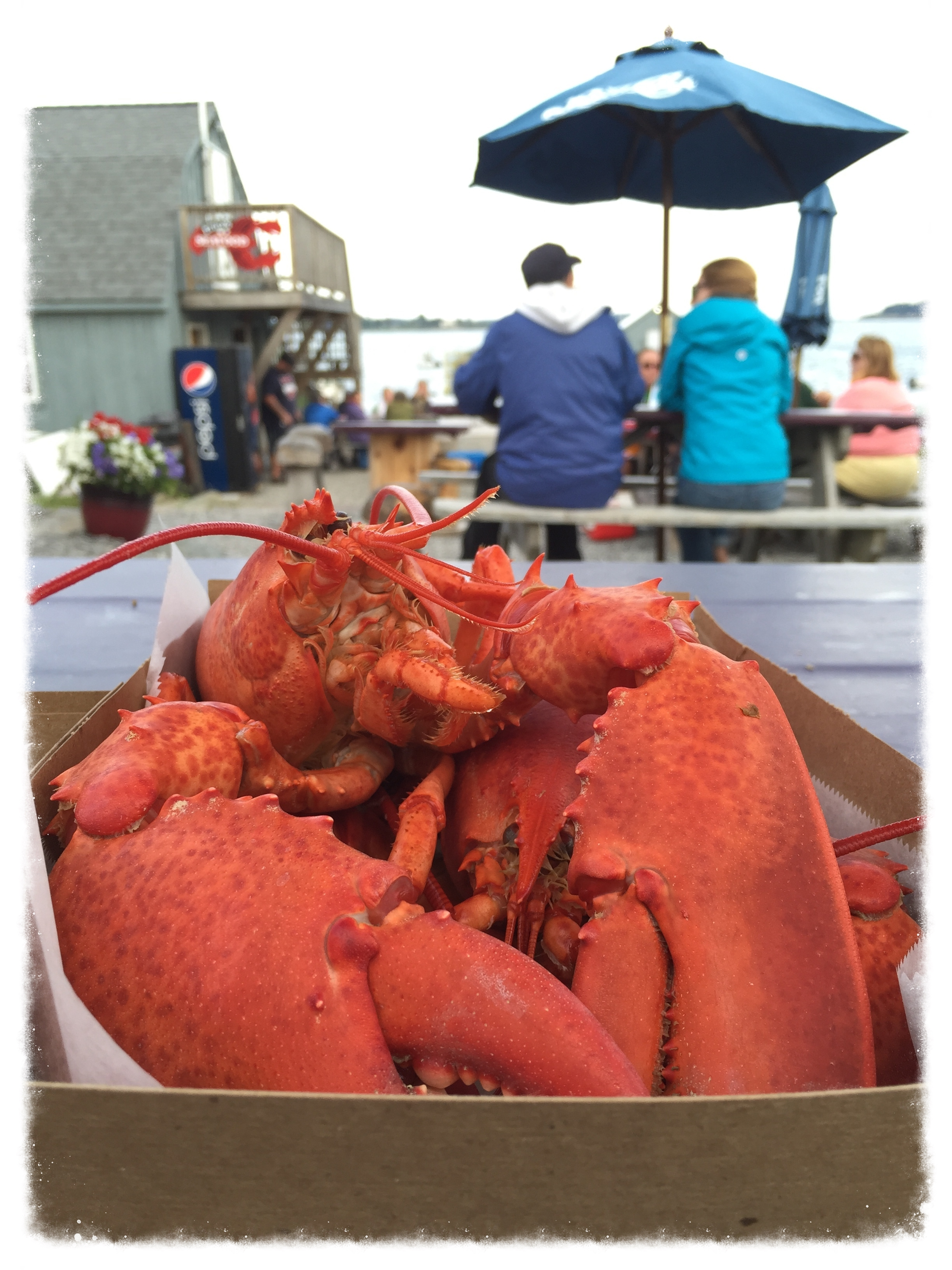An (unofficially) remarkable Maine lobster