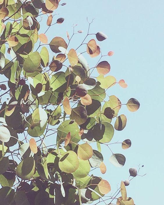 Eucalyptus Leaves / Emanate Design
