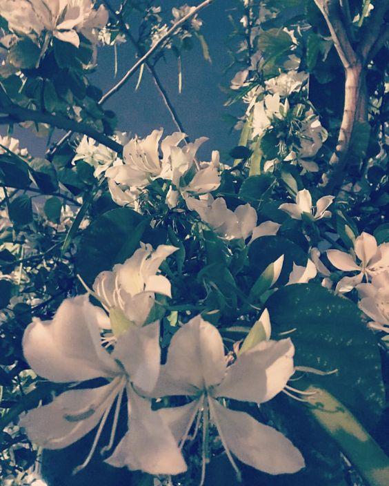 Urban Flora / Emanate Design