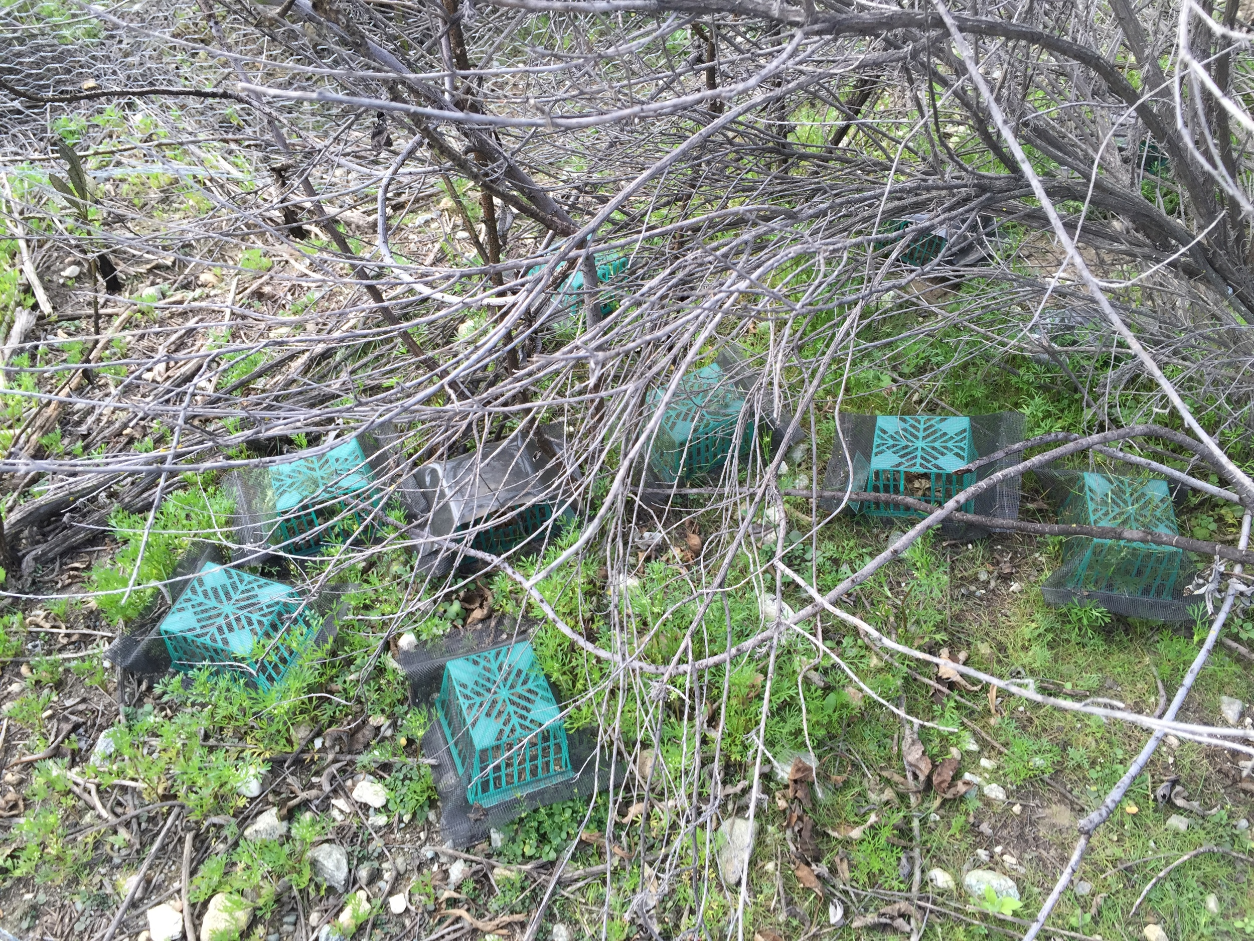 Litterbox in sagebrush