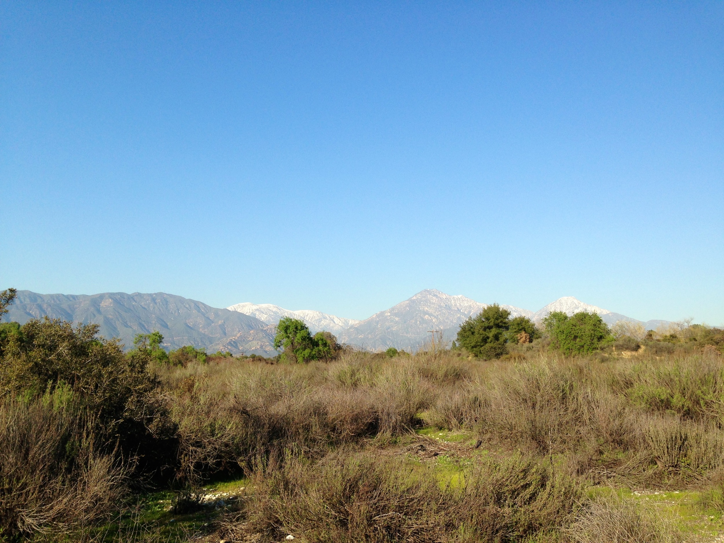 Sage Scrub (dominated by  Artemisia californicus )at the Robert J. Bernard Biological Field Station.