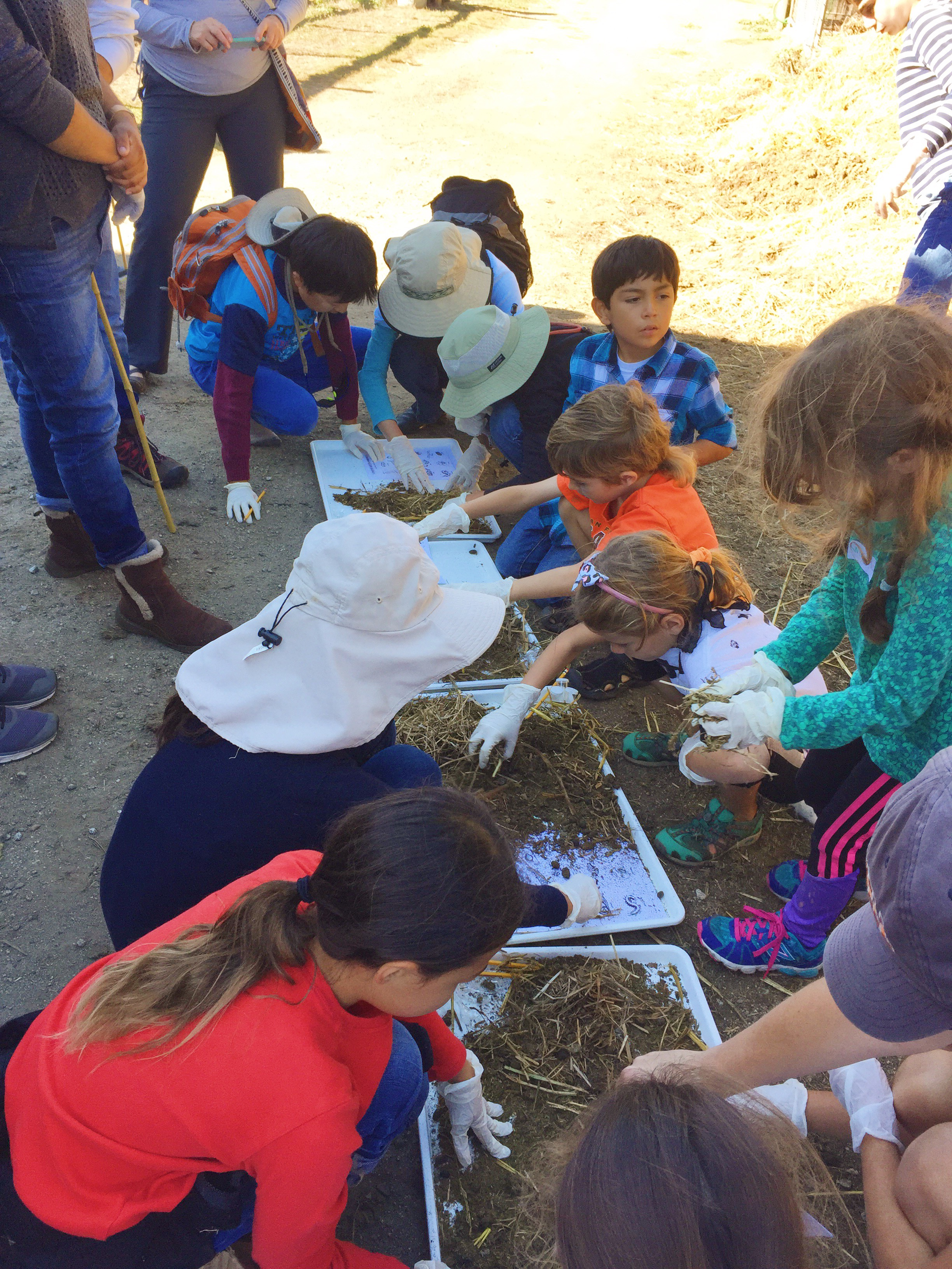 Sifting through the compost to find decomposers.