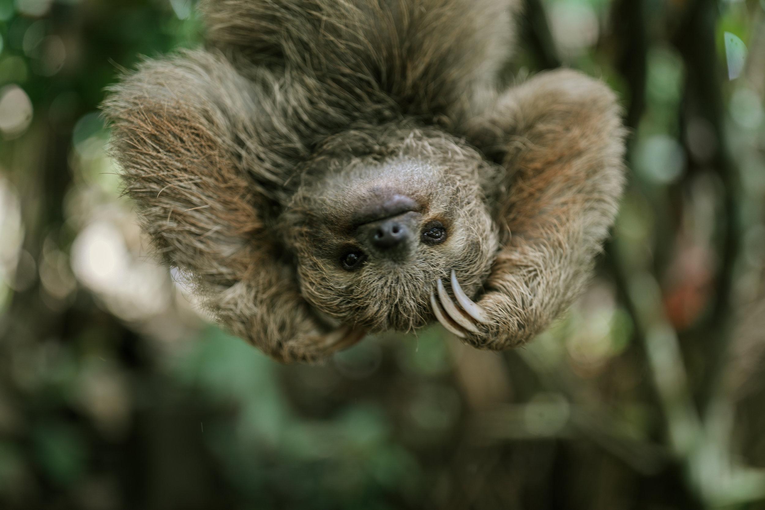 Sloth, Costa Rica, 2018