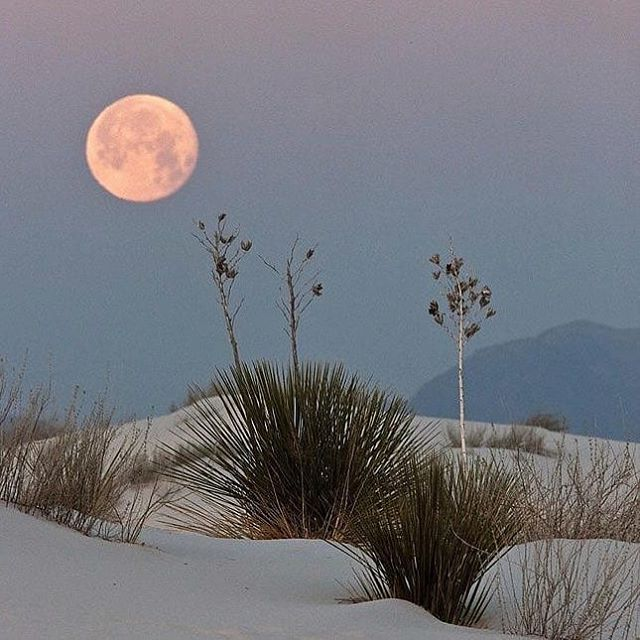 I remember the days when weekends felt magical. Is yours still magical? #moonlit #desert #magicalnights