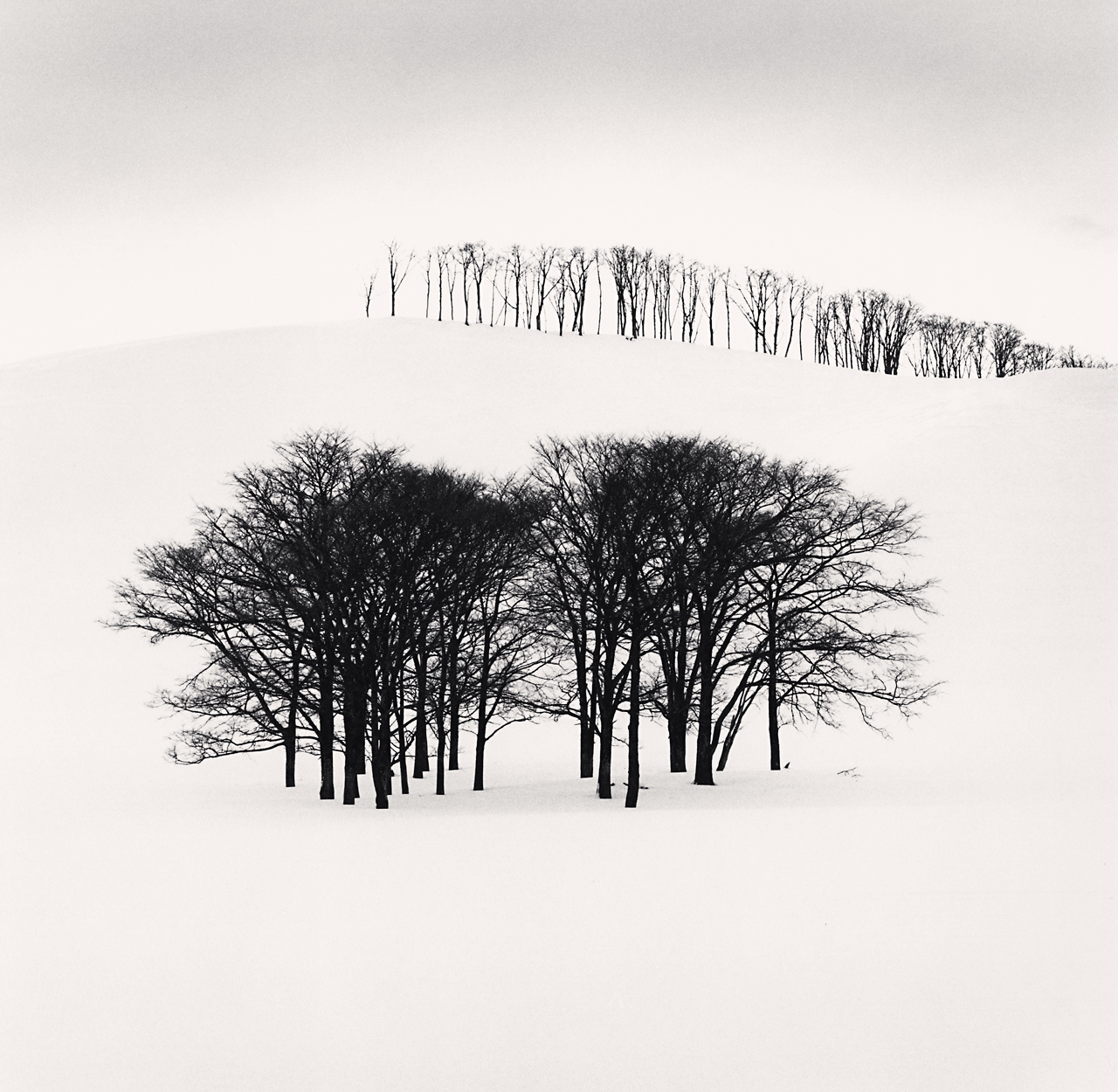 HIlltop Trees, Study 3, Teshikaga, Hokkaido, Japan. 2004 .jpg