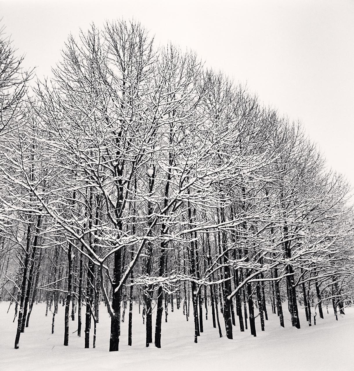 Forest Snow, Sakkuru-Otoineppu, Hokkaido, Japan. 2014.jpg
