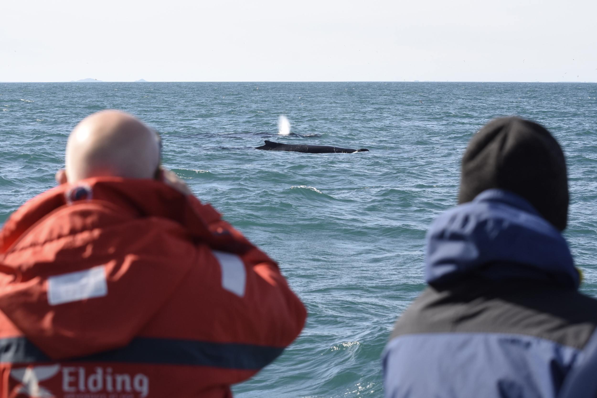 Small groups Whales, Eyjafjord and Akureyri