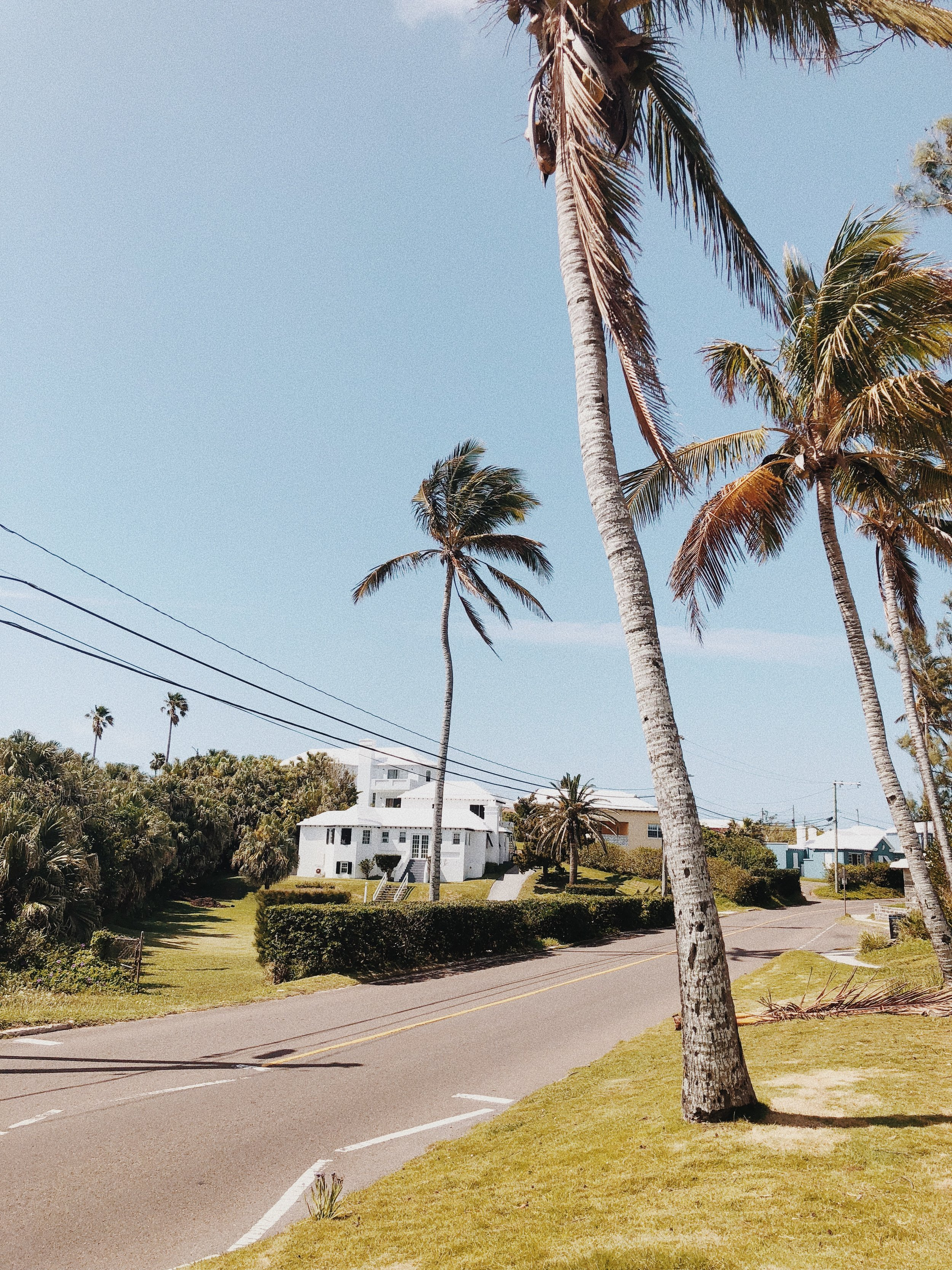 BERMUDA  | PALMS AHEAD